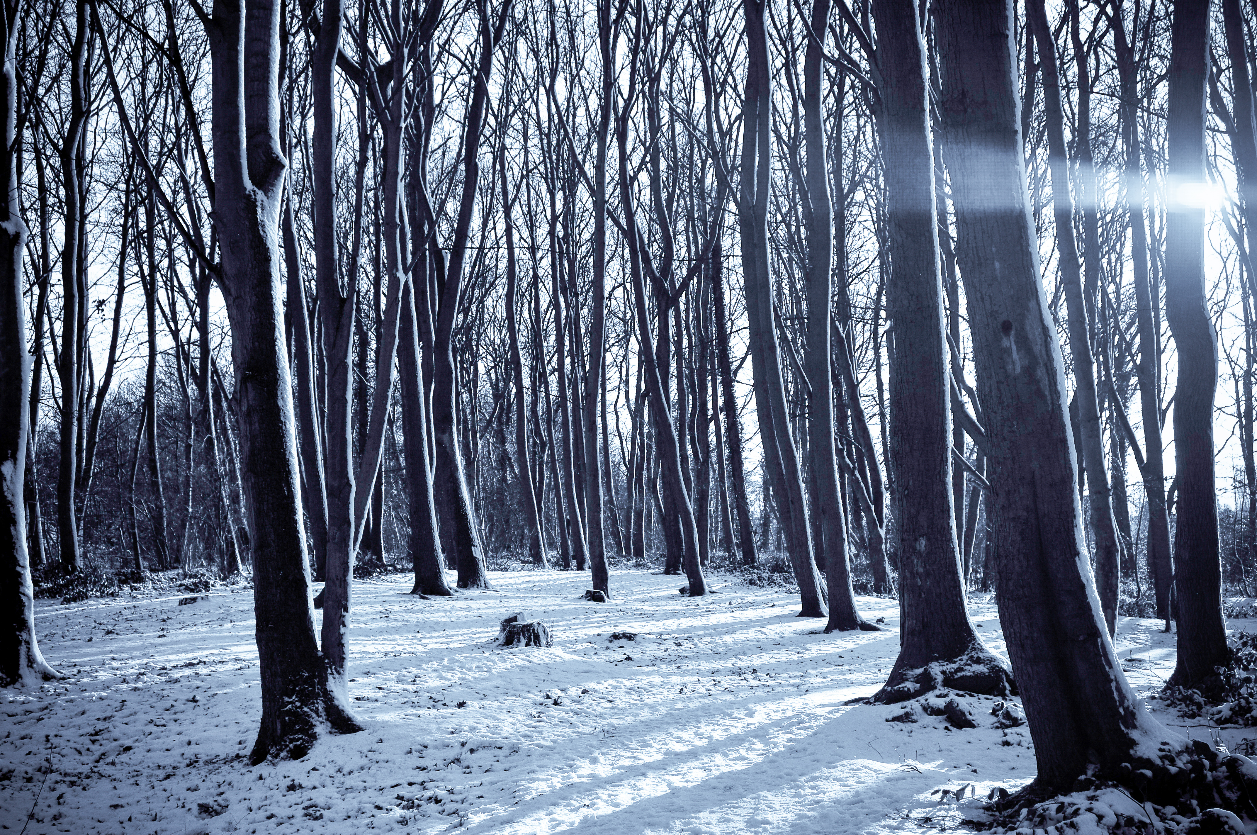 Falling Snow Wallpaper Widescreen Free Stock Photo Of Cold Forest Nature
