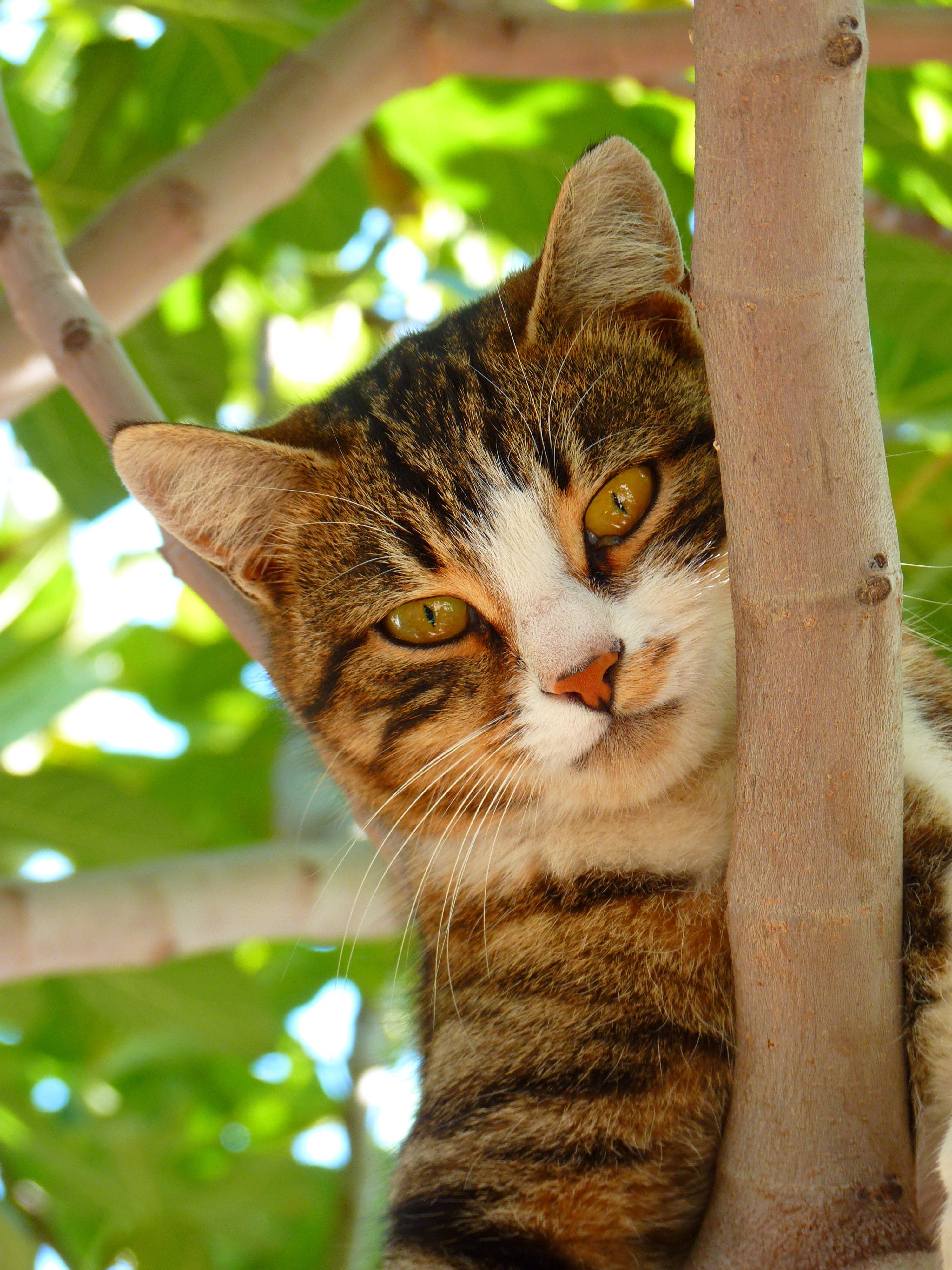 Cute Pet Animals Hd Wallpapers Cat On Tree Branch During Daytime Focus Photography 183 Free