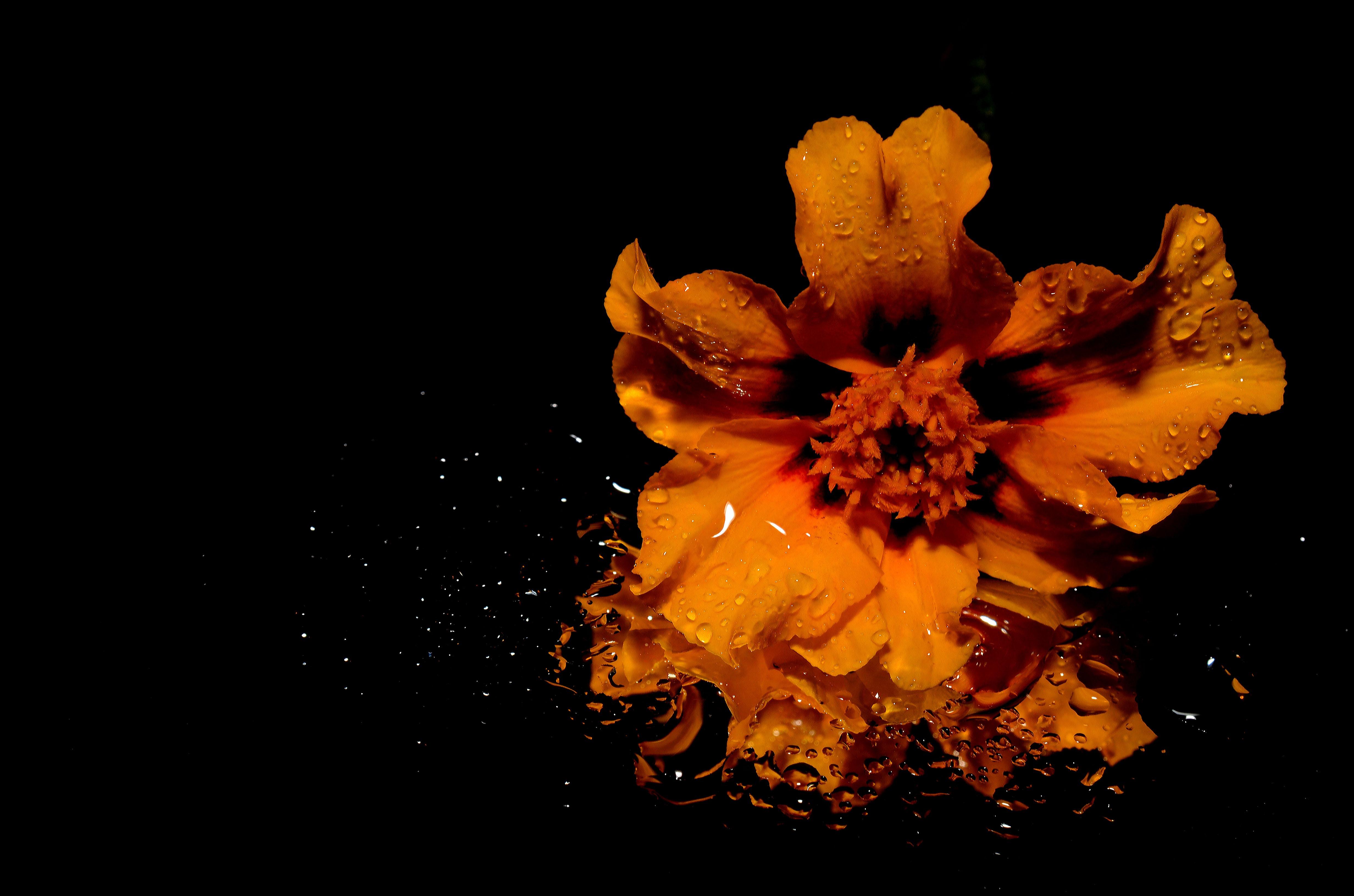 Orange Color Wallpaper Hd Orange Flower Illustration 183 Free Stock Photo