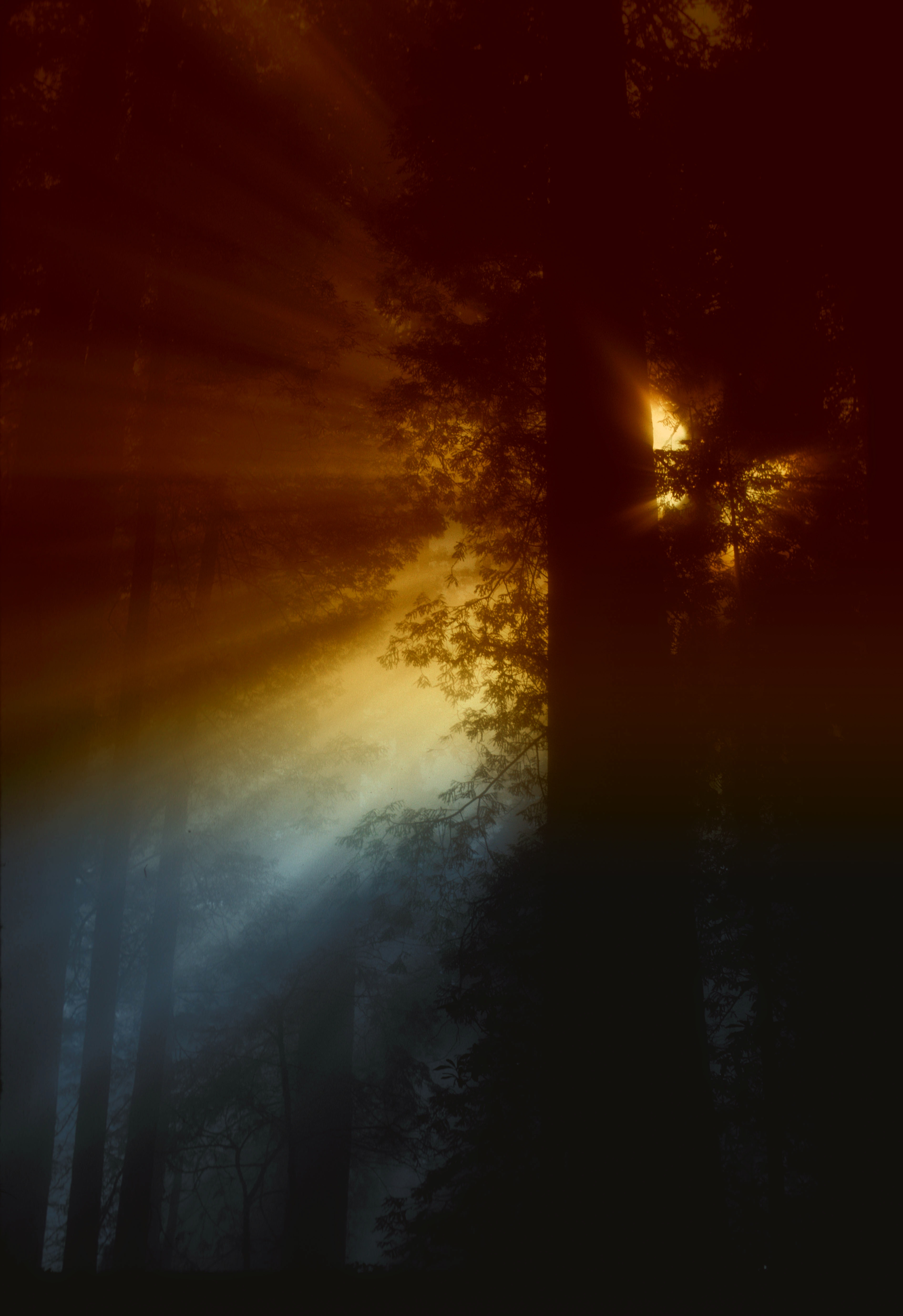 Forest Black And White Wallpaper Ray Of Sunlight Flowing In Trees 183 Free Stock Photo