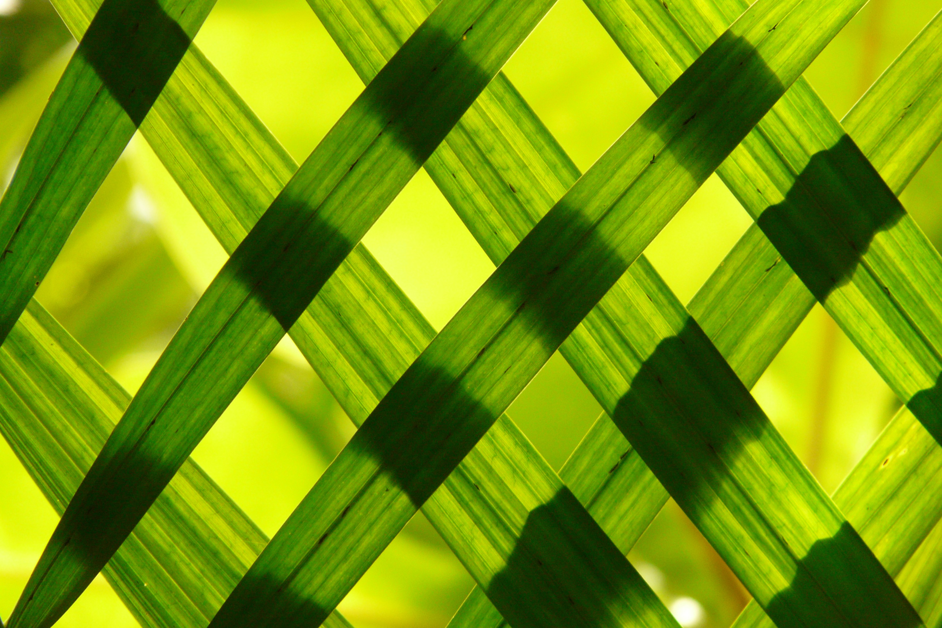 Animated Nature Wallpapers Free Download Green Woven Frame 183 Free Stock Photo