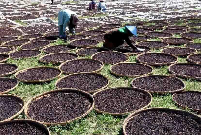 Harga Cengkeh Terkini Harga Cengkeh Terbaru Penjualan Petani Berharap Permen Impor Cengkih Dihapuskan Republika Online