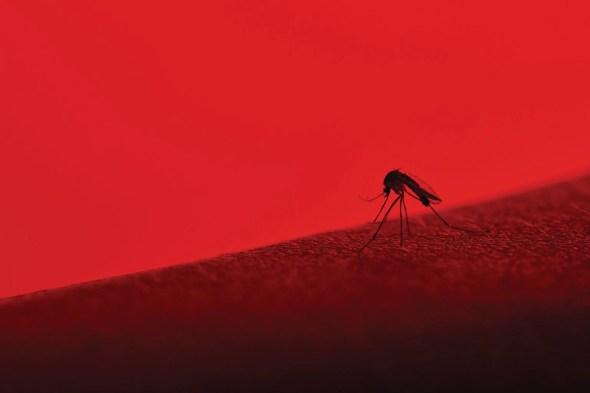 Cómo la primera campaña de vacunación contra el dengue del mundo terminó en un desastre