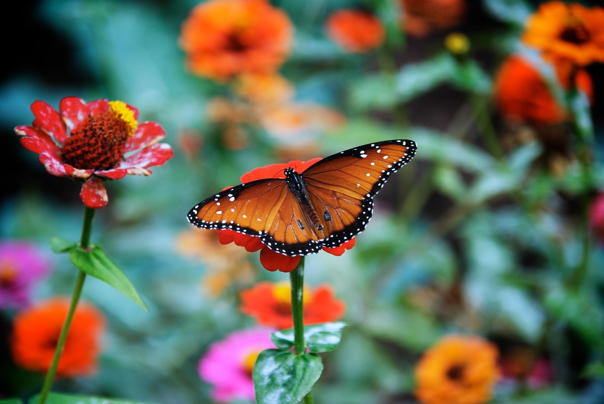 Pink Full Hd Wallpaper Butterfly Flower Jpg