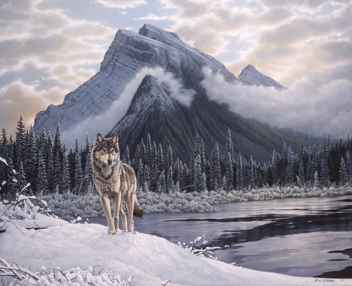 Snow Falling At Night Wallpaper Lone Wolf Mount Rundle