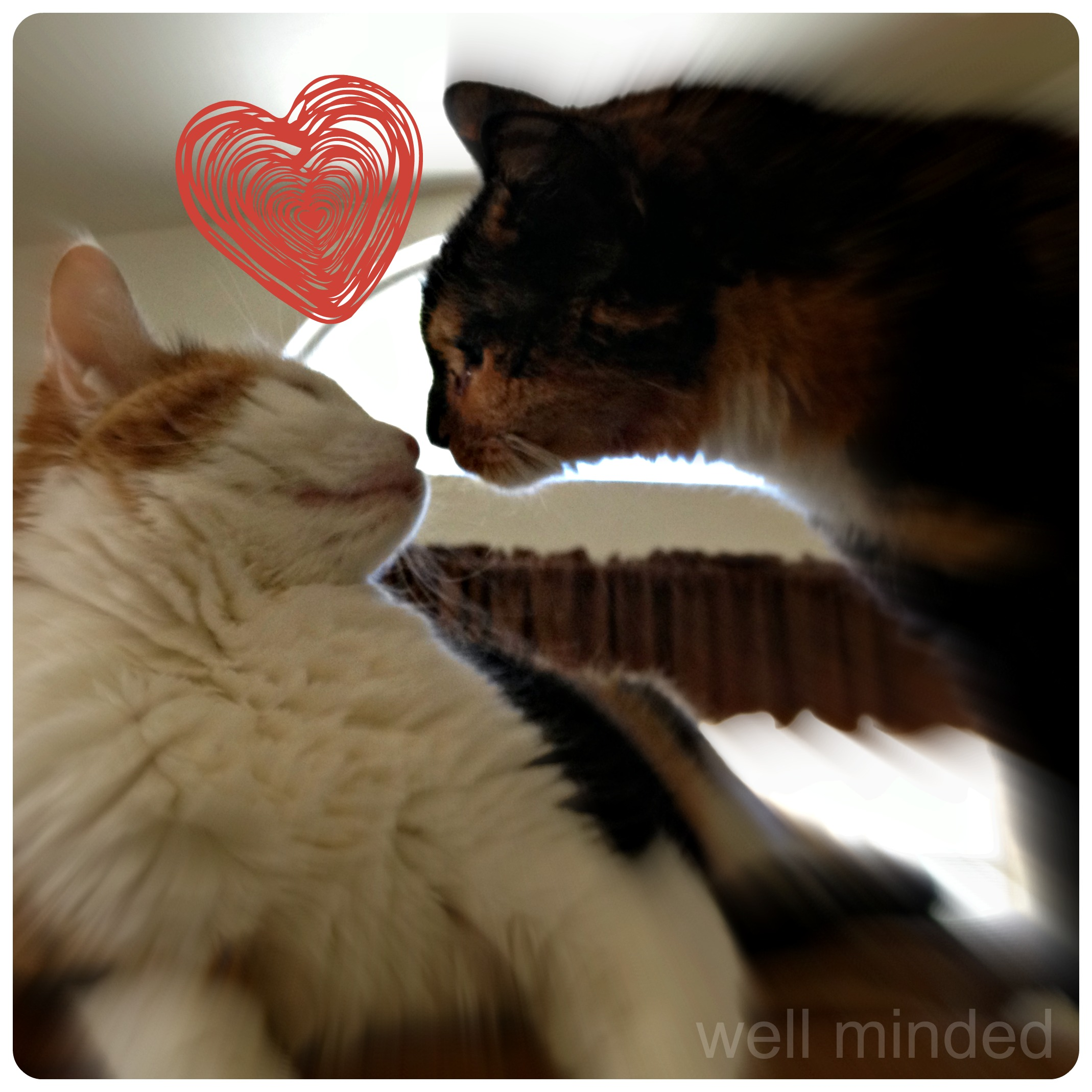 Animal Crush Wordless Wednesday Cat Crush Well Minded Pets