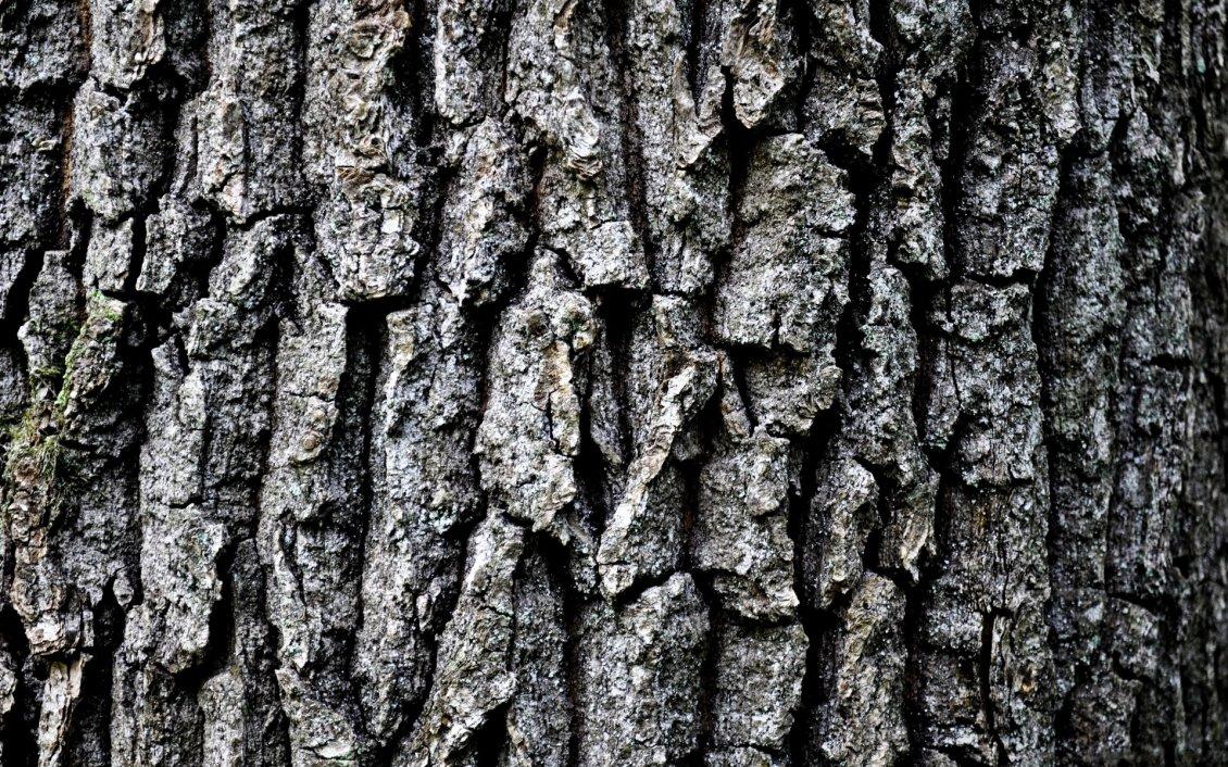 How To Make Anime Wallpaper Grey Tree Bark Hd