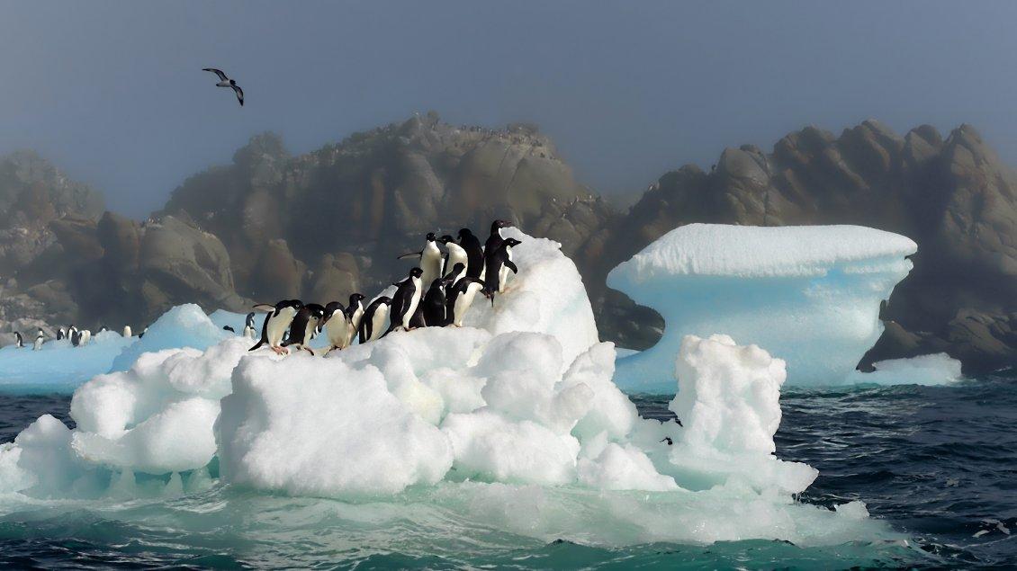 Cute Cartoon Bird Wallpapers Many Penguins On A Iceberg Antarctica Wallpaper