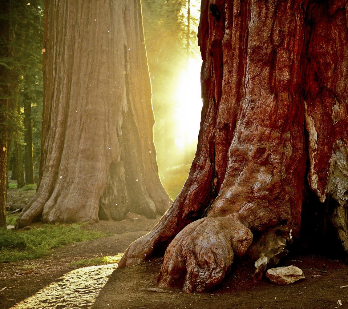 Cute Cartoon Hd Wallpapers Free Download Strong Sun Shining Through The Tree Trunks In The Forest