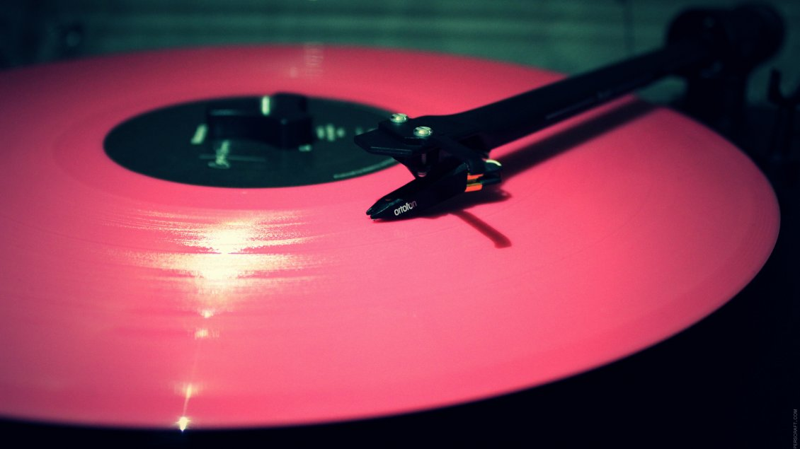 Girls Of The Wilds Wallpaper Pink Vinyl Record Music Hd Wallpaper