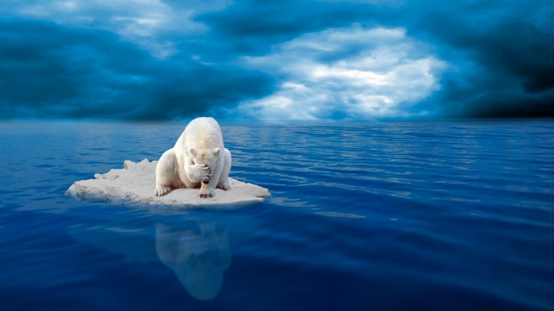 Mercedes New Cars Hd Wallpapers Sad Polar Bear On Ice In The Middle Of Sea