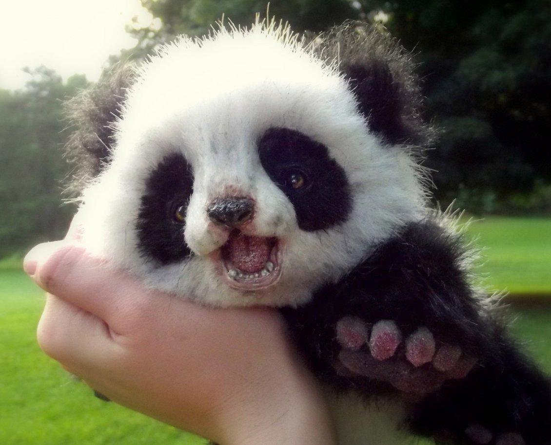 Nature Animal Wallpaper Hd Cute Panda Bear Cub Wild Animals Wallpaper