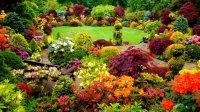 Beautiful backyard garden - Colorful garden