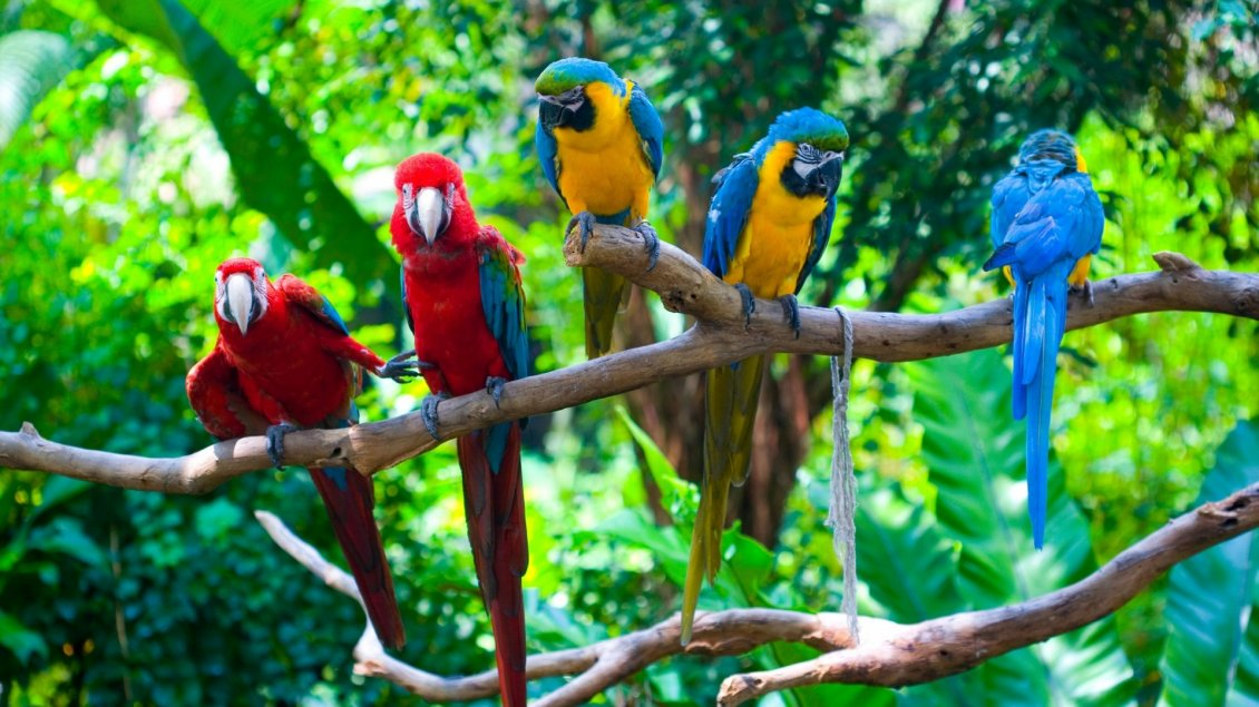 3d Wallpapers Cars Free Download Many Colorful Parrots On A Tree Branch