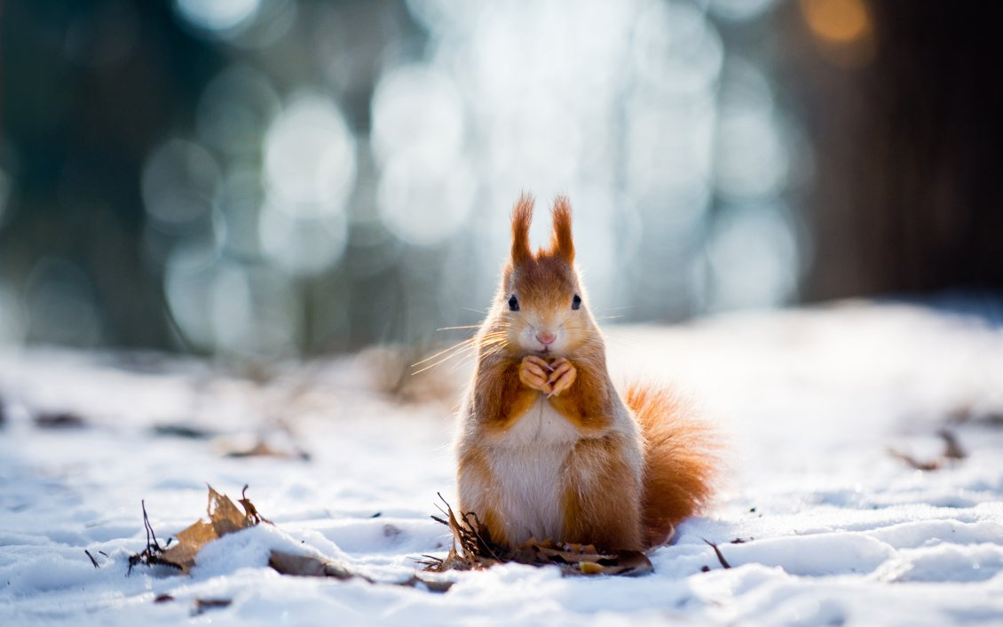 Animal Anime Girls Cute Wallpaper Sweet Little Squirrel In The Snow Winter Wallpaper