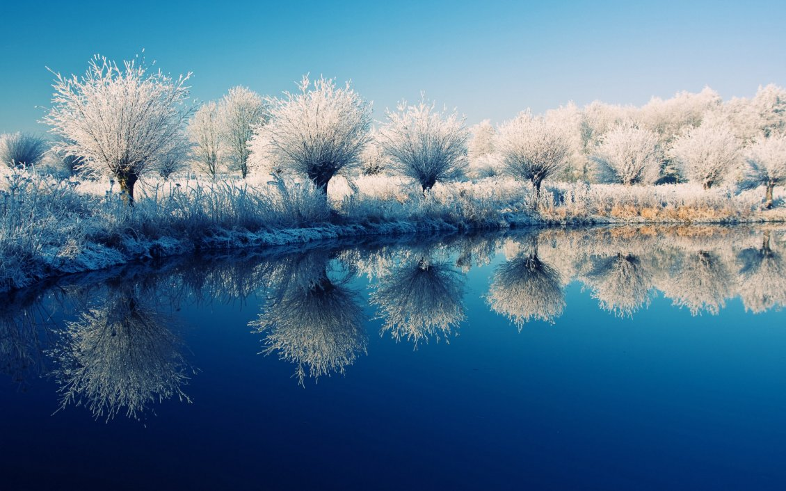 Free Falling In Love Wallpaper Frozen Trees On The Edge Of The Lake Beautiful Mirror