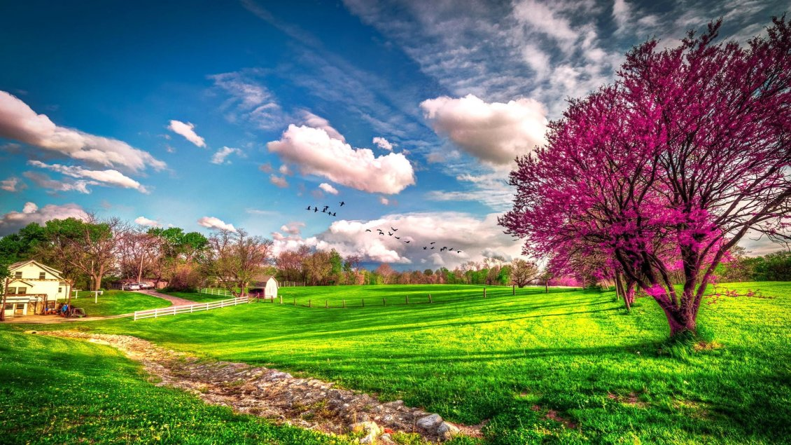Cute 3d Cartoon Wallpapers Landscape Beautiful Spring Nature Hd Wallpaper