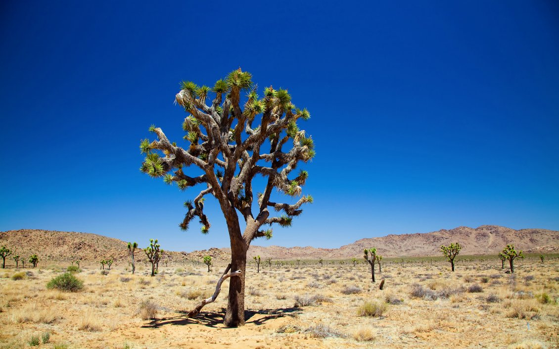Mercedes New Cars Hd Wallpapers Trees In The Dessert Hot Summer Season