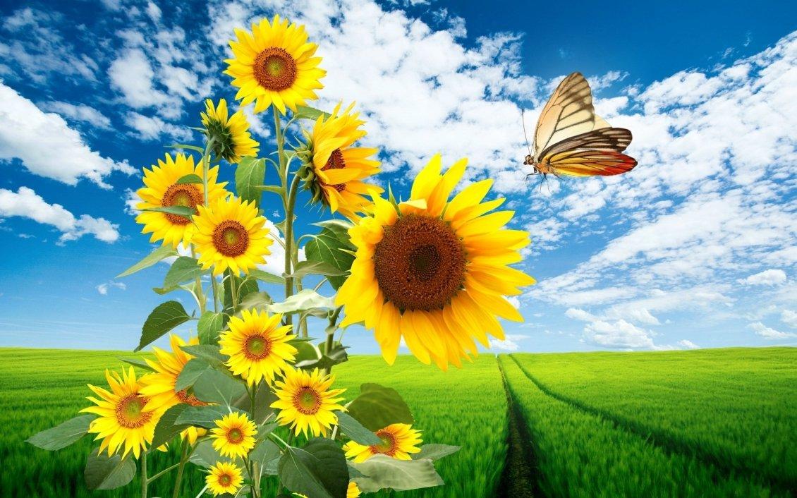 Bugatti Hd Wallpapers Free Download Big Sunflowers And A Beautiful Butterfly Hd Wallpaper
