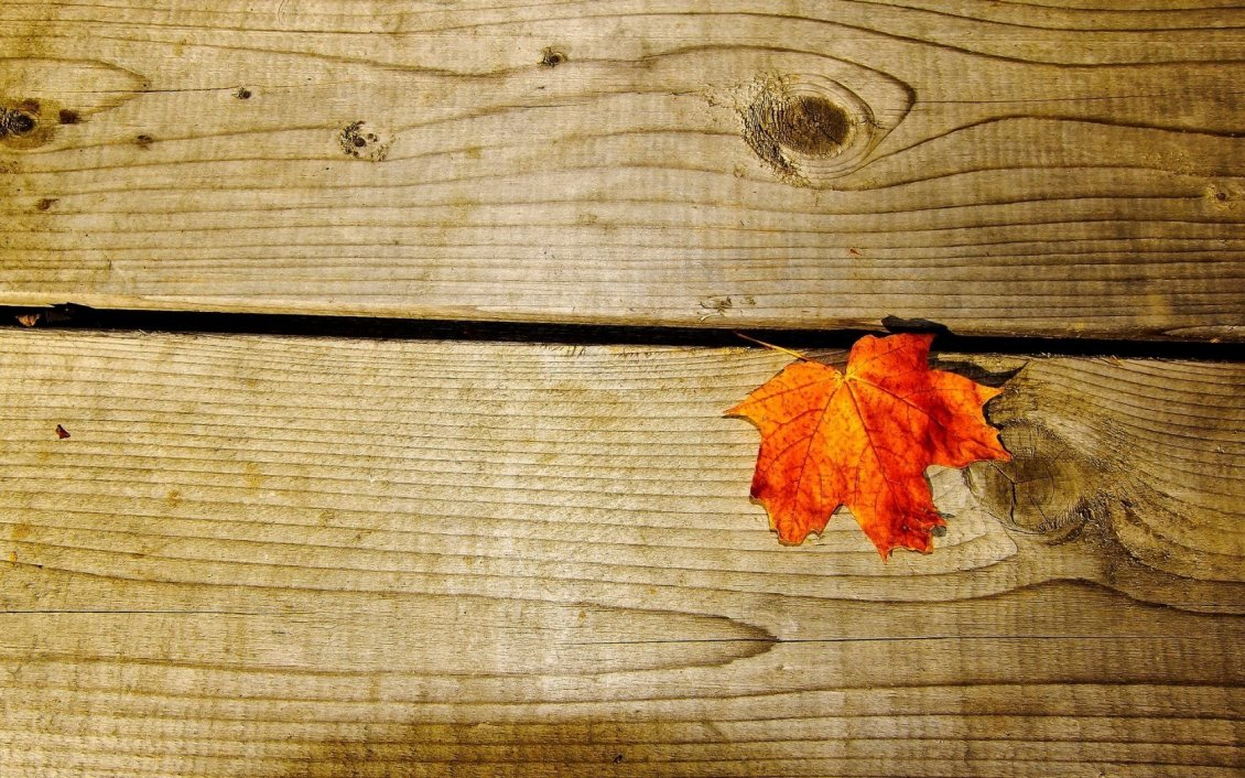 Cute Rustic Fall Wallpapers Rusty Leaf On A Piece Of Wood Hd Wallpaper
