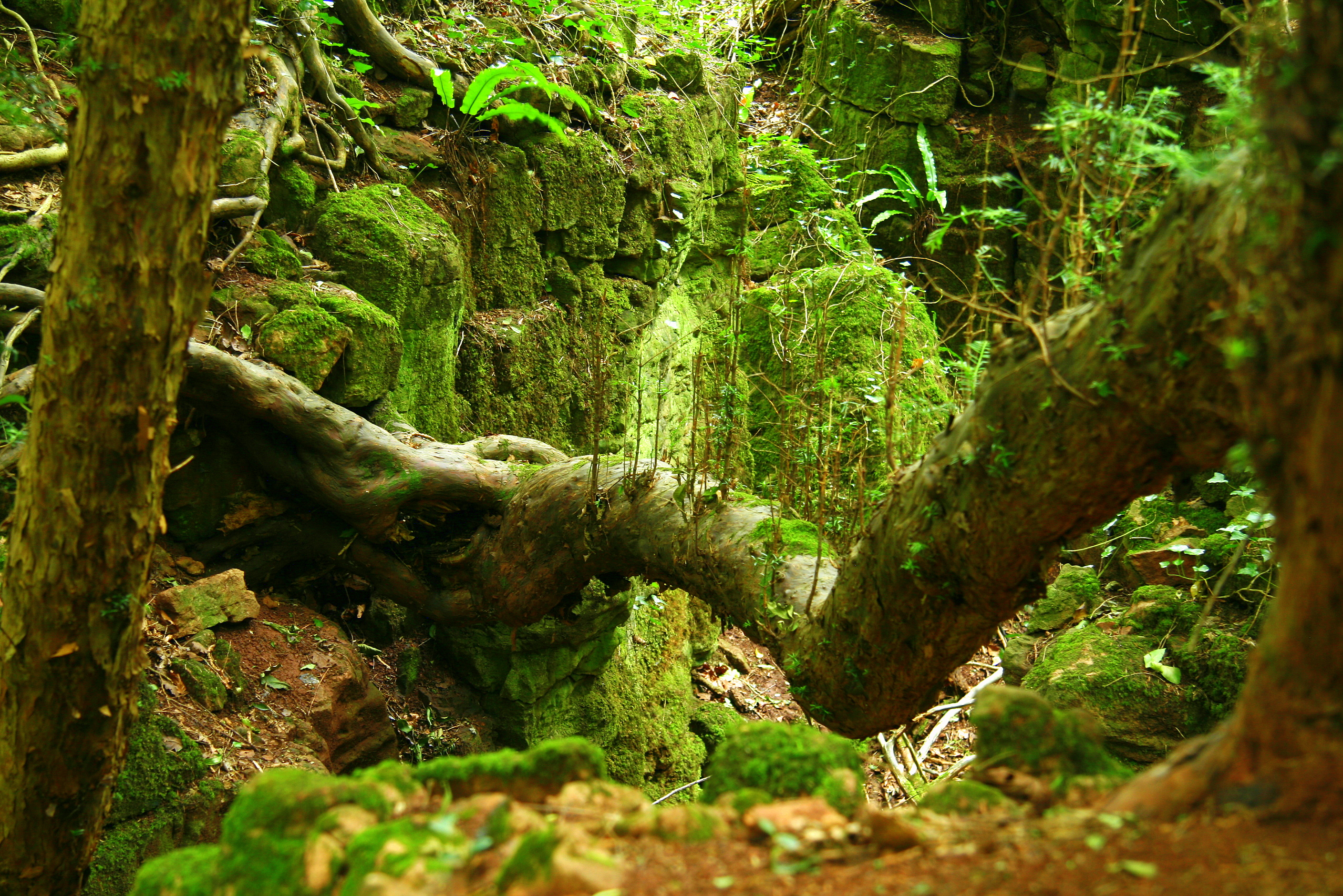 Old Wood Wallpaper Hd Puzzlewood Forest In England Thousand Wonders