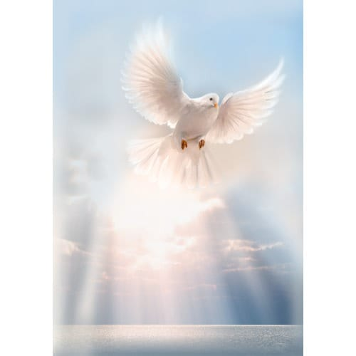 Rest In Peace Quotes Wallpaper White Dove Personalized Prayer Card Priced Per Card