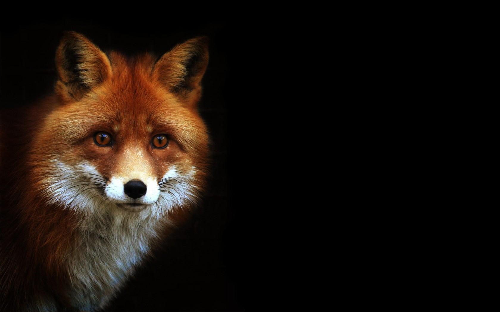 Forest Animal Wallpaper For Fox Sakes