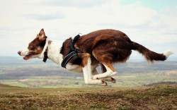Small Of Border Collie Names