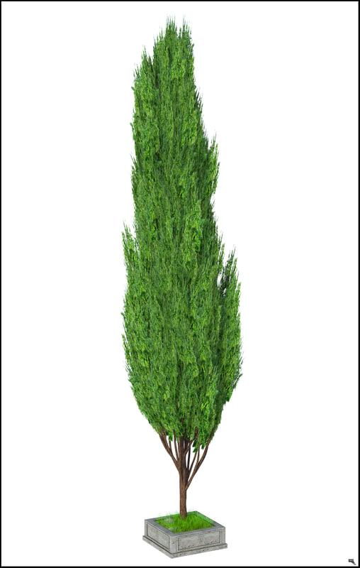 Poplar tree 3D model - TurboSquid 1237919