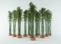 bamboo bush 3d model
