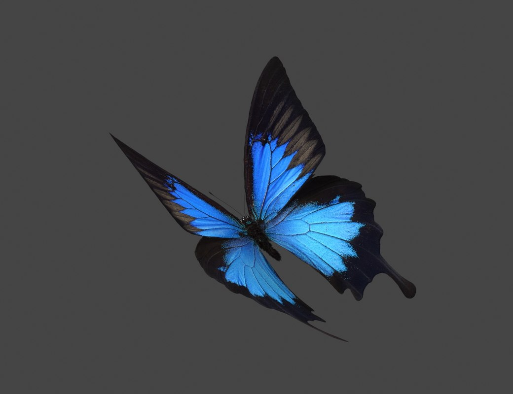 Flying Butterfly Animated Butterfly Flying Away Animation