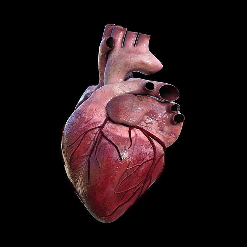 3d Modeling Wallpaper Solidworks 3d Human Heart