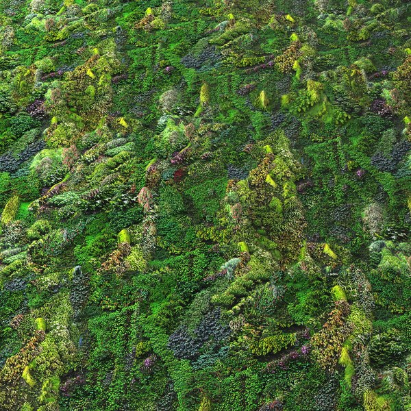 Animated Jungle Wallpaper Texture Other Green Wall Seamless