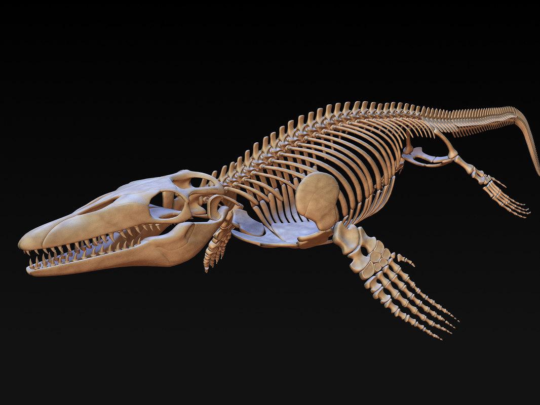 Dinosaur 3d Live Wallpaper 3d Mosasaurus Skeleton Model