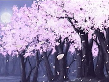 Beautiful Girl Hd Wallpapers 1080p It S Ok But We Can Do Better Cherry Blossoms Tv