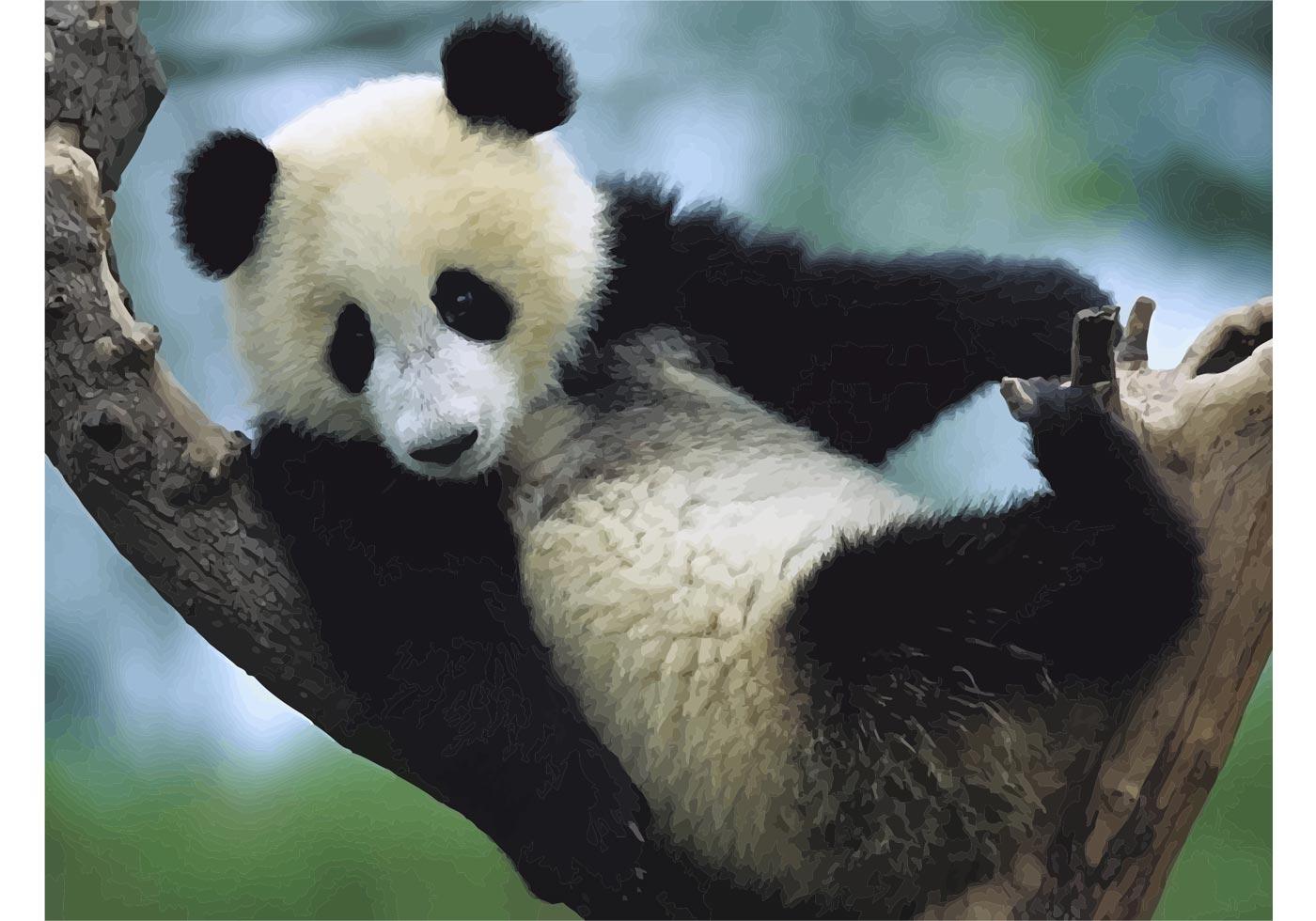 Cute Child Love Wallpaper Panda Cub Download Free Vector Art Stock Graphics Amp Images