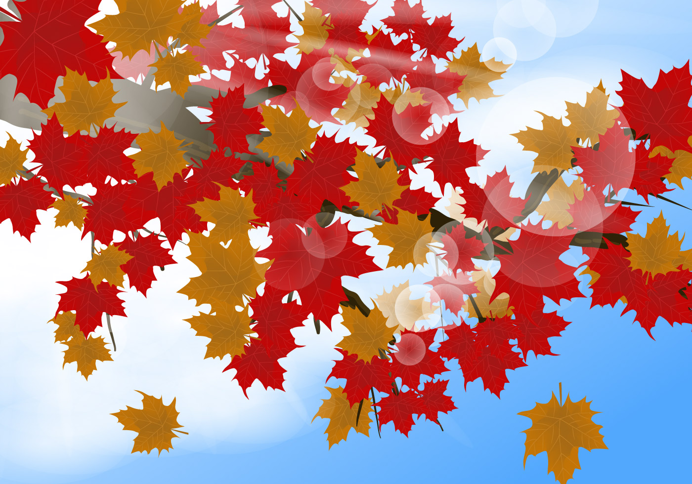 Maple Leaf Wallpaper For Fall Season Japanese Maple In The Morning Background Download Free