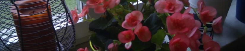 Blomstrande