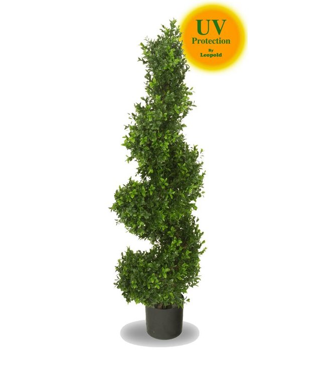 Wanneer Buxus Knippen Buxus Knippen. Great Buxus In Pot Moderne Vormen With