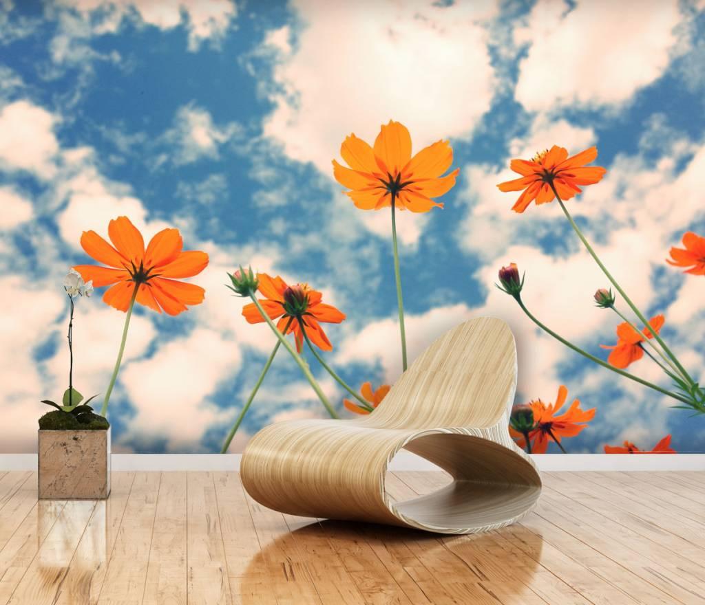 3d Flower Mural Wallpaper Mural Cosmos Flower Walldesign56 Wall Decals Murals