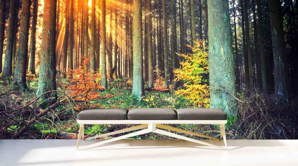 Steen Behang 3d Fotobehang Bos Herfst - Walldesign56.com