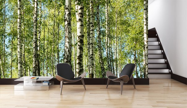 3d Wallpaper For Bedroom Walls Mural Forest Birch Trees Walldesign56 Wall Decals