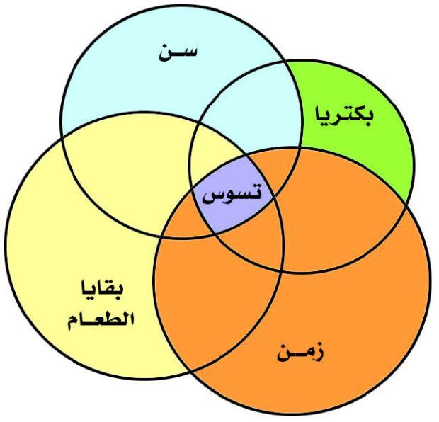 الشكل يبين العوامل الاولية المسببة للتسوس (تضافر اربعة عوامل معا).