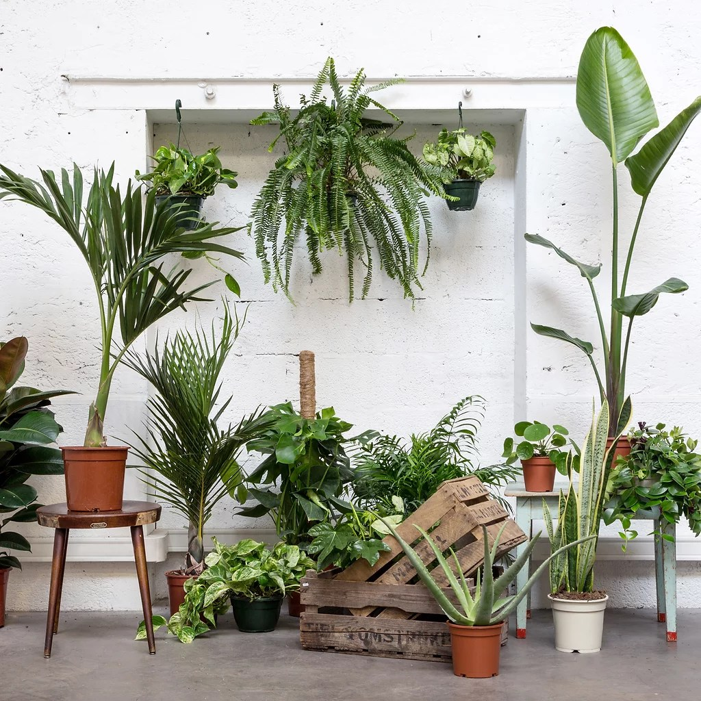Vente Plantes Paris Plantespourtous Paris