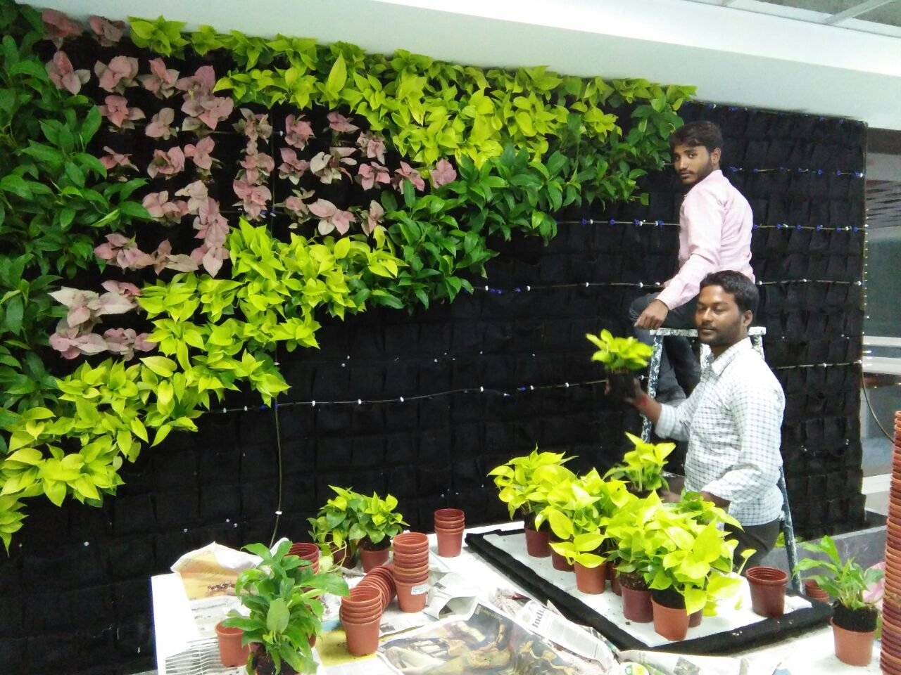 Vertikal Gardinen Vertical Gardens Bangalore Green Walls India Lifewall