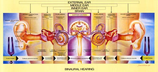 Persistent tinnitus usually indicates the presence of sensory hearing loss 2