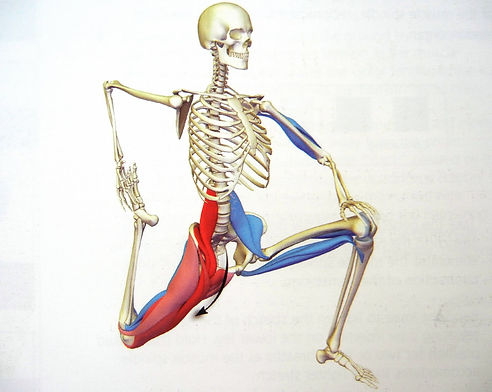 The Hip Flexors  If Forgotten Can Lead To Lower Back Pain Kalm