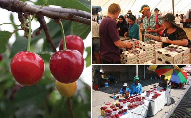 cherry stalls at the Ficksburg cherry festival