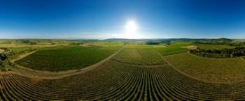 Plaine viticole du Minervois