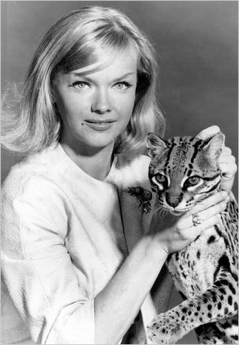 Sincere Girl Wallpaper Anne Francis Actress In Tv Series Honey West Dies At